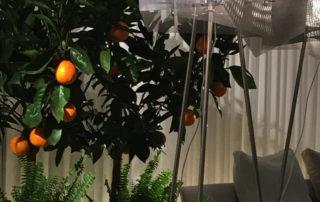 grande-cristal-arbre-thierry-vide